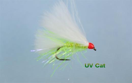 UV Cat