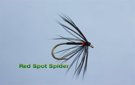 Red Spot Spider