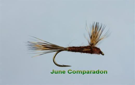 June Compara Dun