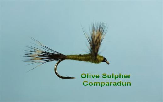 Olive Sulphur Compara Dun