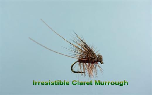 Irresistible Claret Murrough Sedge