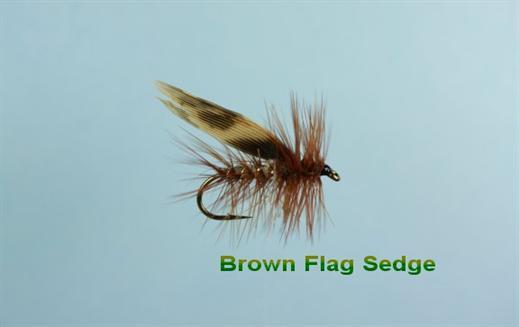 Brown Flag Sedge