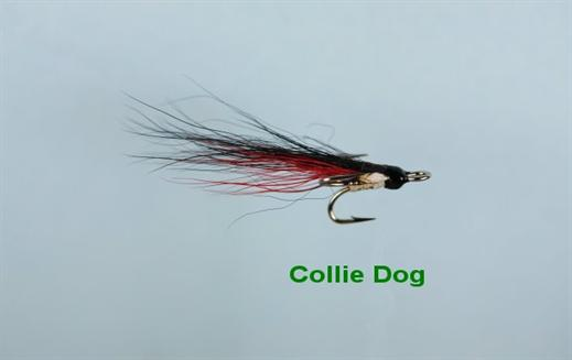 Collie Dog JC Micro Treble