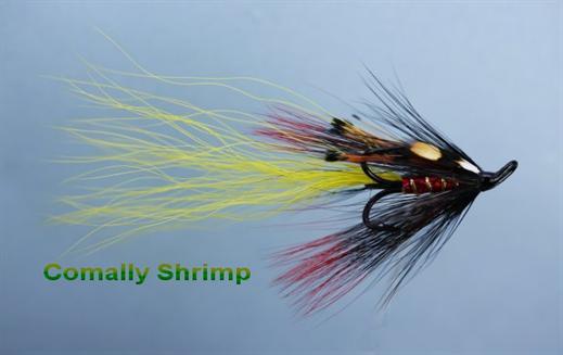 Comally Shrimp JC