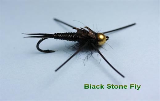Black Stone Fly