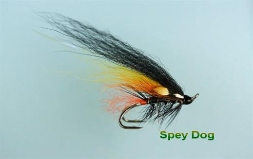 Spey Dog