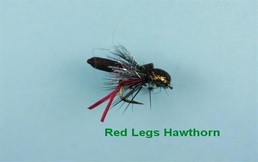 Red Legs Hawthorn