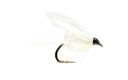 White Moth Winged Wet
