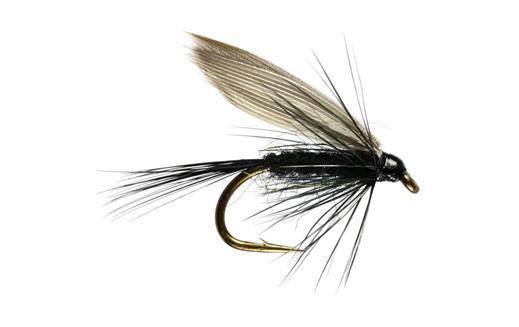 Black Gnat Winged Wet