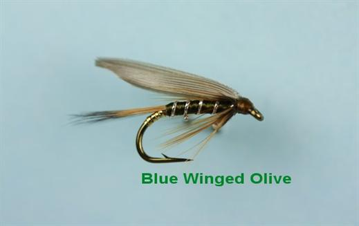 Blue Winged Olive Winged Wet