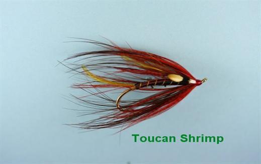 The Toucan Shrimp