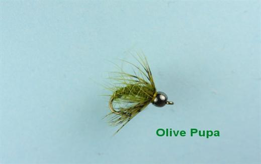 Olive Pupa Tungsten Nymph
