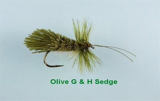 Olive G and H Sedge