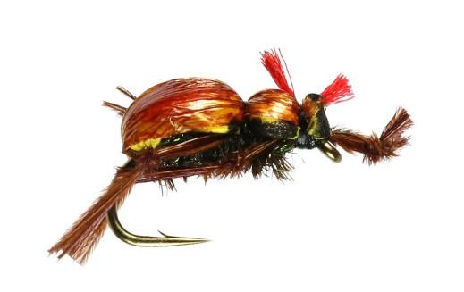 Brown Beetle Foam