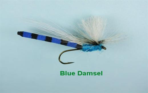 Blue Damsel Daddy