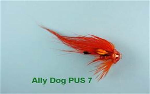Ally Dog PUS 7