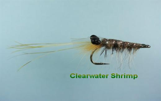 Clearwater Shrimp