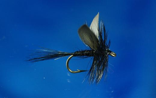Black Gnat Mayfly