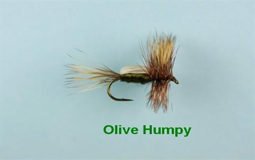 Olive Humpy