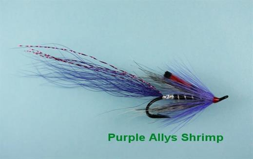 Allys Shrimp Purple