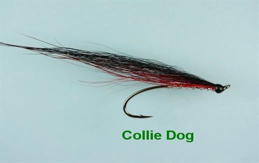 Collie Dog Salmon Single
