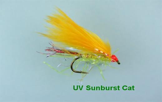 UV Sunburst Cat