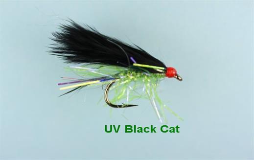 UV Black Cat Mini