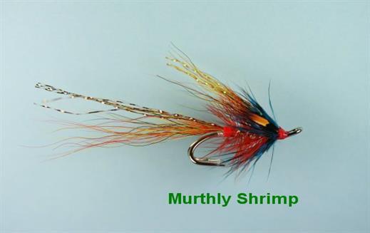 Murthly Marauder Shrimp