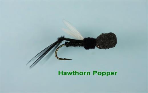 Hawthorn Popper