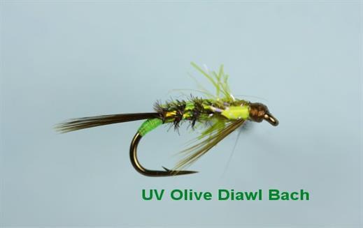 Diawl Bach UV Olive