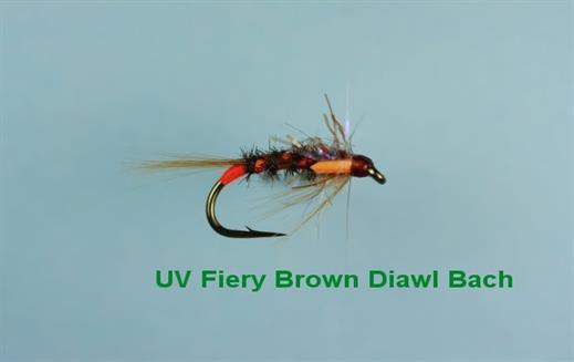 Diawl Bach UV Fiery Brown