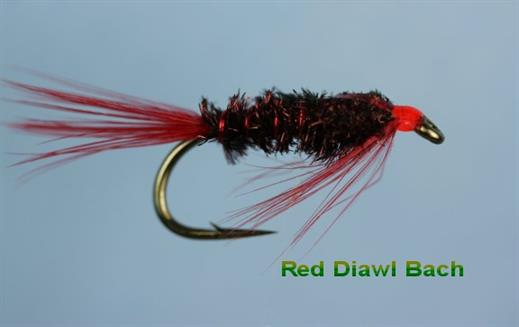 Diawl Bach Red Head