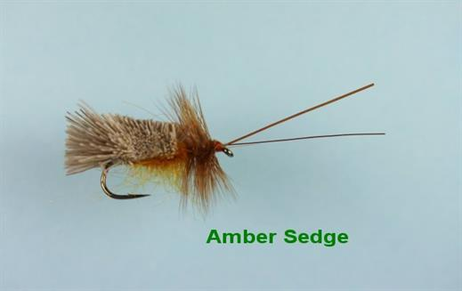 Amber Sedge
