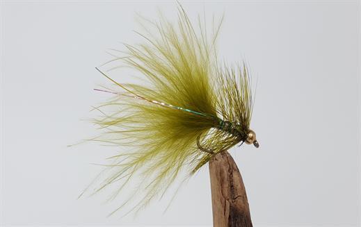 Olive Dancer