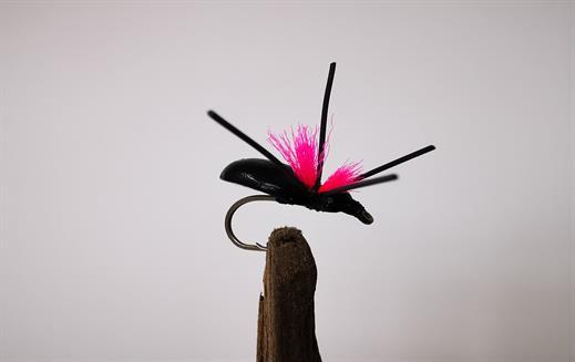 Foam Beetle Pink