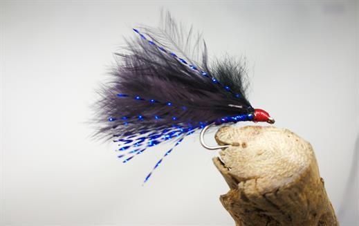 Blue Flash Cormorant