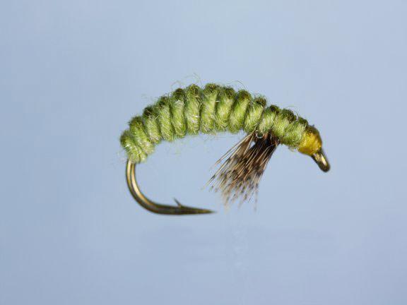 Rhyacophila Larva