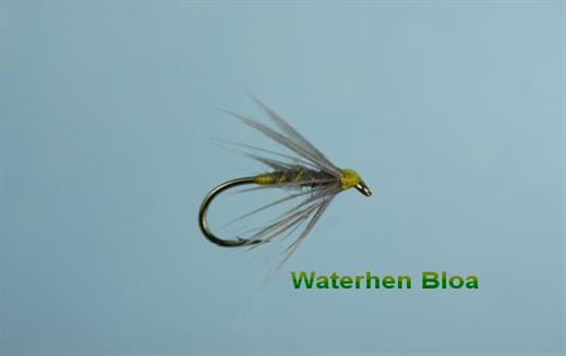 Waterhen Bloa