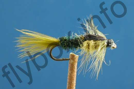 Olive Peacock Montana