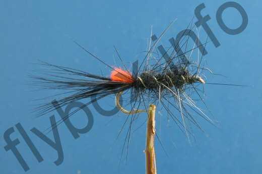 Black Woolly Worm