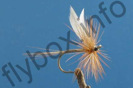 Orange Quill