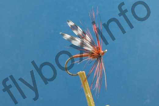 Brown Long Legged Gnat