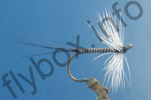 Badger Quill Hackle