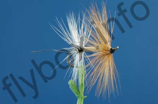 Fore And Aft Mayfly