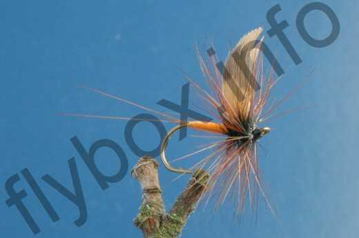 Oak Fly