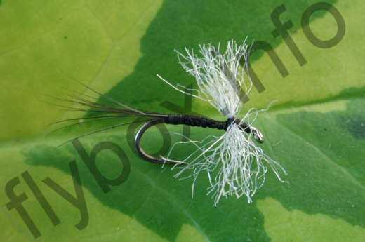 Caenid Ant Fly