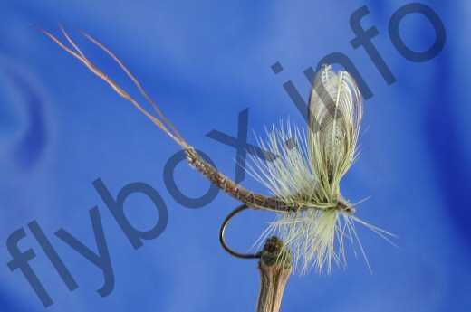 Wonder Wing Mayfly