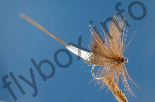 Detached Body Mayfly Brown