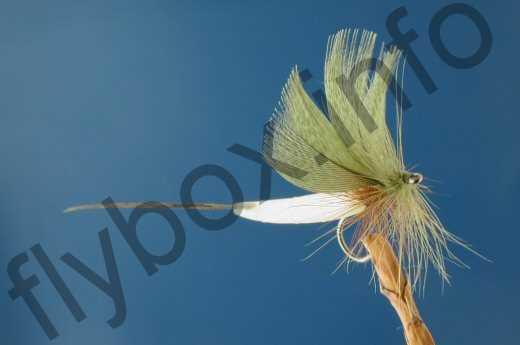 Detached Body Mayfly Green