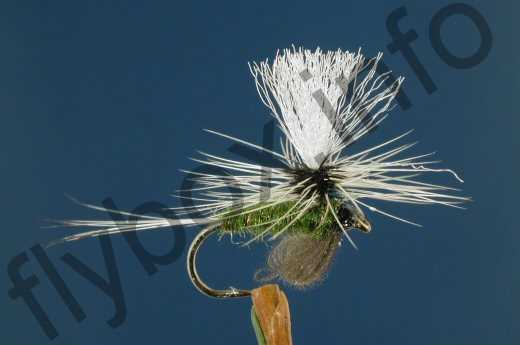 Olive Badger Para Emerger